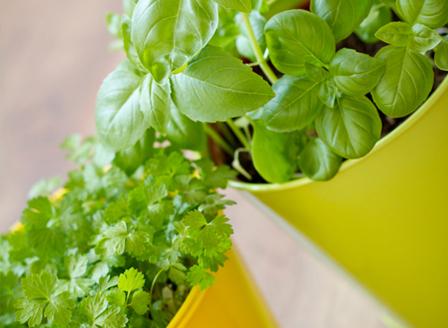 7 билки, които да отглеждаме на балкона