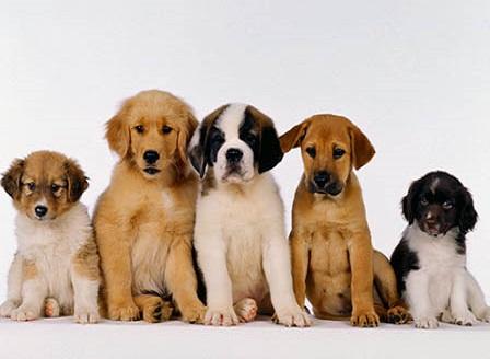 Изберете куче, което подхожда на зодията ви