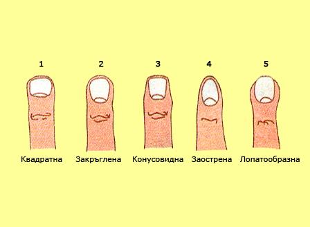 Формата на пръстите на ръцете разкриват какъв човек сте