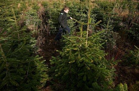 Купи жива елха, помогни на дете