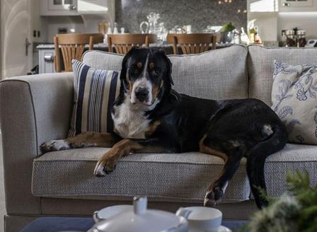 Куче у дома предотвратява конфликтите