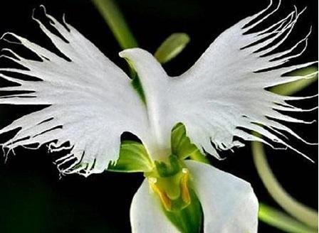 В Ботаническата градина показват орхидеи, събрани от цял свят