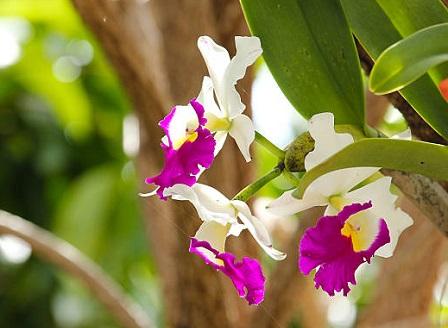 Стартира фестивалът на орхидеите в градините Кю