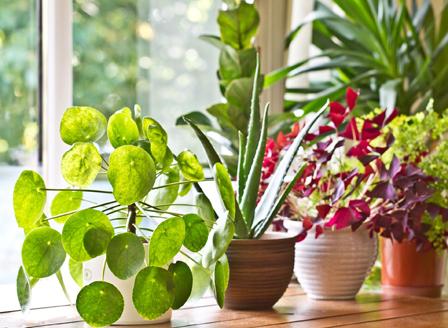 Да се погрижим за стайните растения през март