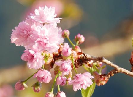 Днес настъпва астрономическата пролет