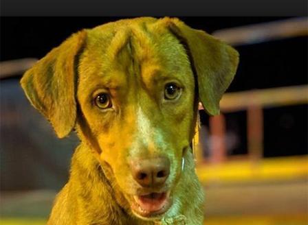 Спасиха куче на 220 км в морето