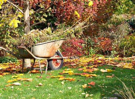 Грижи за градината през септември