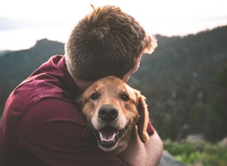 Куче пред любовна връзка?