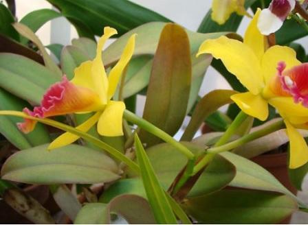 Ботаническата градина на БАН открива тематичната изложба