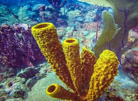 Кораловите рифове се възстановяват без туристи в Доминиканската република