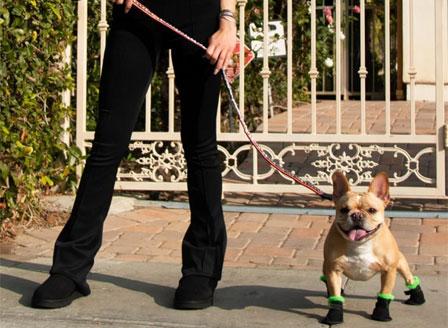 Луксозен бранд пусна елегантни велурени боти за кучета