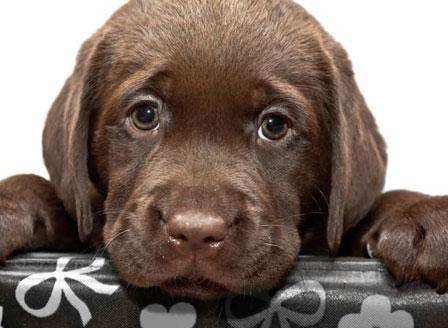 Кучетата могат да изпитват стрес заедно със стопаните си