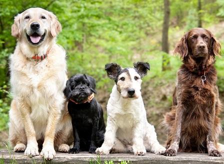 Днес е Световният ден на кучето