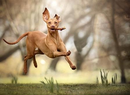 И кучетата могат да бъдат хиперактивни